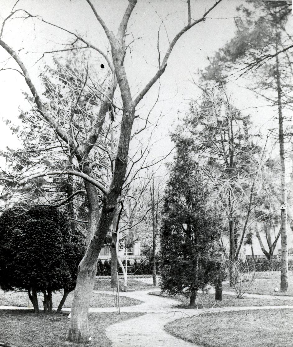 black-and-white photo of a garden path and trees